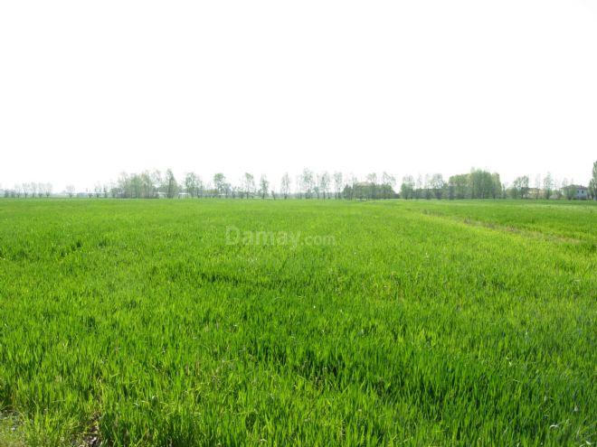 Vendita di Terreno agricolo a Imola
