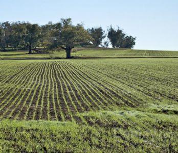 Vendita di terreno-agricolo a rimini